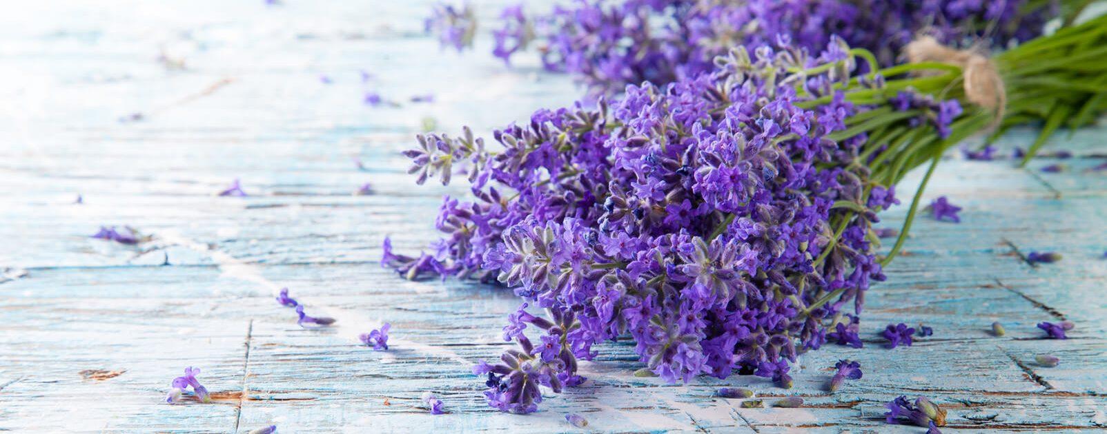 Menschen mit Riechstörung riechen kein Lavendel.