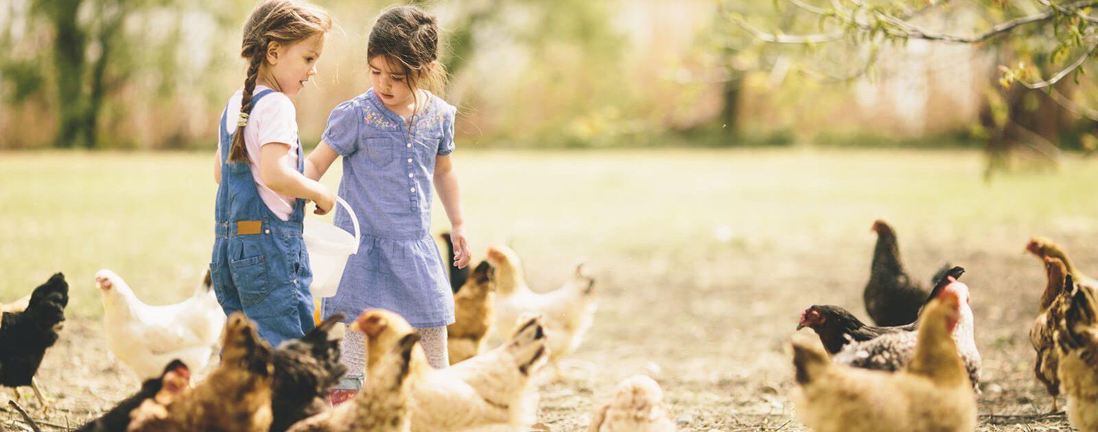 Mädchen beim Hühner füttern hat keinen Schnupfen wegen einer Allergie.