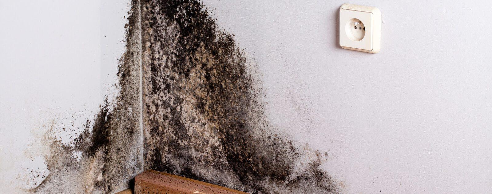 Schimmel an einer feuchten Wand kann bei einer Schimmelpilzallergie gesundheitliche Beschwerden zur Folge haben.